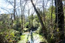 Vegetación de ribera en el arroyo de Cals.