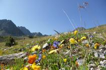Mosaico florístico de los prados alpinos en el Pas de la Casa.