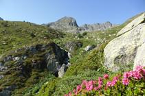 Rododendros y arroyo de las Abelletes.