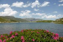 Rododendros en el lago de las Abelletes.