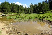 Podemos distraernos buscando huellas de fauna salvaje en el fango del estanque.
