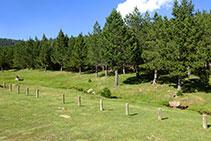 El pastoral río del valle de las Comes de Rubió.