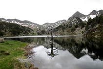 Pino negro muerto reflejándose en el lago de Bacivers.