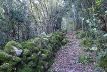 Camino definido con paredes de piedra seca.