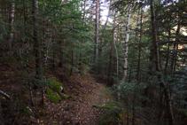 Bosque del Ròdol.