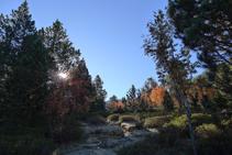 Colores de otoño en el bosque.