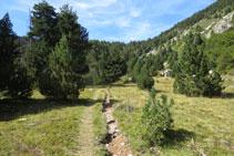 El bosque deja paso a una zona abierta.