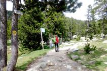 Cruzamos el puente y tomamos el sendero que se adentra en el pinar.