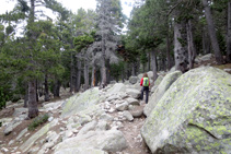 Zona con bastantes bloques de granito cercanos al sendero.