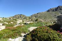 Rododendros subiendo hacia los lagos de Ensagents.
