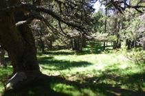 El bosque de Campeà, dónde el camino se pierde.