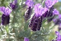 Nos encontramos en una zona de clima típicamente mediterráneo y con una gran riqueza vegetal.