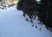Cruzamos la pista y seguimos por el sendero del bosque, el Pla de la Creu de Fumanya está ya muy cerca.