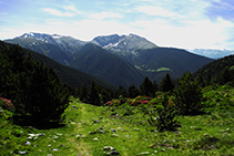 Dejamos el bosque atrás y entramos en el dominio de los prados alpinos.