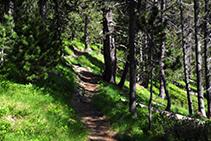 Camino por el interior del bosque.