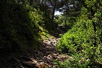 Zona boscosa antes de llegar al puerto de Jovell.