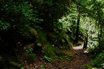Caminando por el bosque de Enclar.