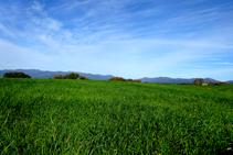 Campos de cereales cerca de Peralada.