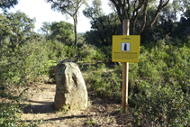 Menhir del Querafumat II.