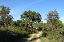 Camino a la fuente de la Verneda.