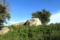 Bloques graníticos entre brotes de romero.