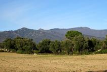 Mosaico de campos, encinares y pinares.