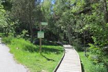 El camino se adentra en el bosque.
