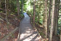 La pasarela adaptada cruza un bosque de abetos.