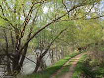 El itinerario nos permite conocer la vegetación de ribera.