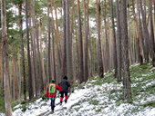 Itinerario por el Bosque de Vir�s