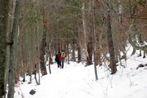 El pino silvestre da paso al haya.