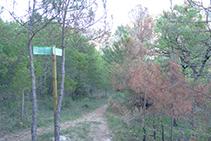 A la izquierda, el segundo sendero que nos llevaría al Grau de Porta. Nosotros seguimos recto adelante.