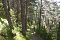 Bosque de la Umbría de la Gonarda.