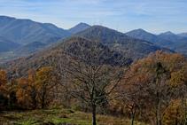 Robles en la sierra de Sant Miquel del Mont.