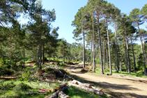 Trabajos forestales en el collado de Terra Negra.
