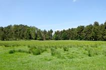 El prado Gespador.