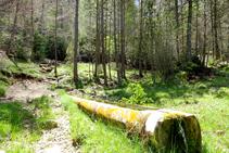 La fuente Assedegosa.