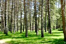 El campo del Ermità.