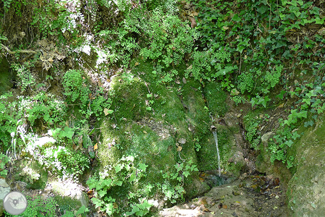 Las fuentes de Peramola (