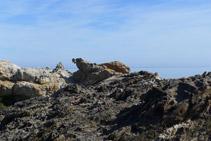 Roca con una forma curiosa. ¿Se parece a una foca?