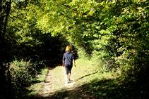 Caminando a la sombra del bosque caducifolio.