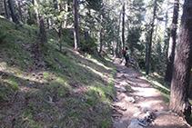 Caminando por el interior del bosque.
