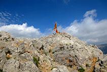 A punto de coronar la cumbre del Pollegó Superior (2.506m).
