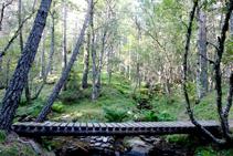 Puente del barranco de Els Forcats.