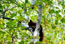 La ardilla, uno de los habitantes del bosque.