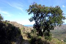 El camino antiguo que comunicaba la Selva de Mar con Sant Pere de Rodes.