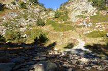 Hacemos un último esfuerzo entre rododendros, frambuesos y arándanos hasta el collado de Comapedrosa.