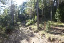 Desvío: dejamos un camino ancho y subimos por un sendero que avanza por entre pinos.