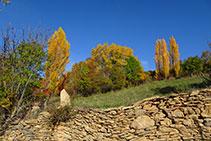 Muro de piedra seca y prado con chopos.