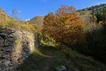 Muro de piedra seca y nogal.
